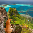 Stock Photo: Dog on steep mountain, Maupiti, French Polynesia