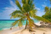 Palm tree, Fakarava, French Polynesia — Stock Photo