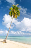 Palm and beach, Maupiti, French Polynesia — Stock Photo