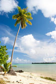Palm tree, Maupiti, French Polynesia — Stock Photo