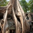 Root of the tree absorbing the ruins of the Temple, Angkor Wat, Cambodia — Stock Photo