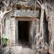Entrance to the ruin of the temple covered by root of the tree, Angkor Wat, Cambodia — Stock Photo