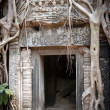 Entrance to the ruin of the temple covered by root of the tree, Angkor Wat, Cambodia — Foto Stock