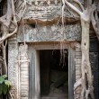 Entrance to the ruin of the temple covered by root of the tree, Angkor Wat, Cambodia — Stockfoto