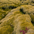 Volcanic lava covered by moss, Iceland — Stock Photo