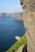 Cliffs of Moher, Ireland — Stock fotografie