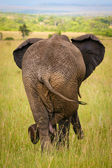 Relaxed elephant waiting for a friends, Masai Mara, Kenya — Stock Photo