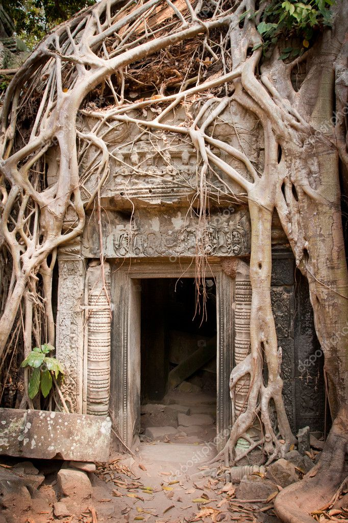 Entrance to the ruin of the temple covered by root of the tree, Angkor Wat, Cambodia — Zdjęcie stockowe #10158671