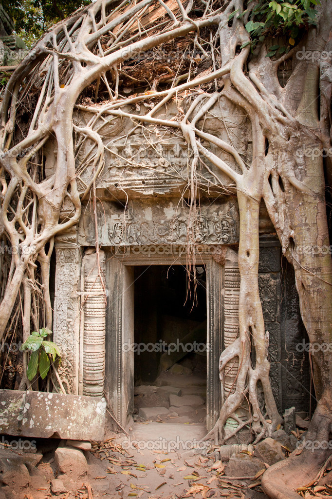 Entrance to the ruin of the temple covered by root of the tree, Angkor Wat, Cambodia — Stockfoto #10158671