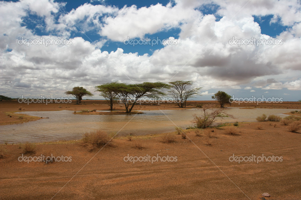 View of landscape with african trees in the background, Kenya  Stock Photo #10159525