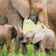 Stock Photo: Two baby elephants playing in the grass, Masai Mara, Kenya