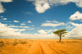 Lonely tree in the desert — Stock Photo