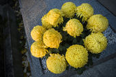Yellow flowers on grave — Stock Photo