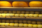 Cheese on shelves in store — Stock Photo
