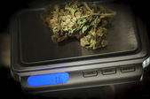 Weed on a marijuana scale — Stock Photo