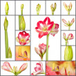 Stock Photo: Collage of amaryllis plant growth phases on white background