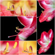Collage of Extreme close up view of a amaryllis flower temple - Stock Photo