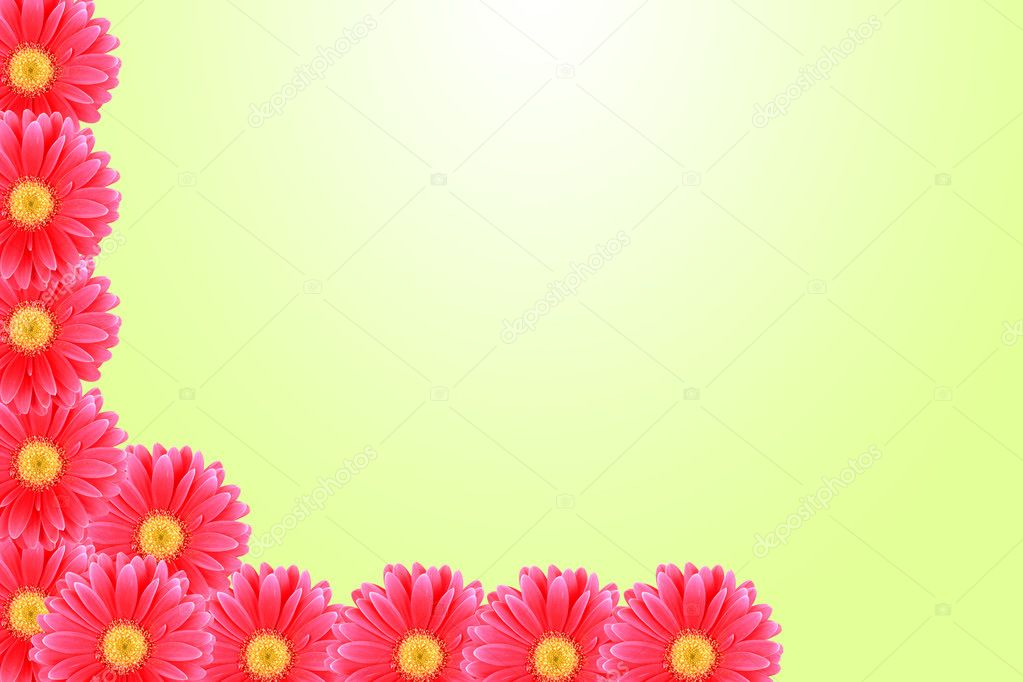 Background flower pink Daisy — Stock Photo #9599371