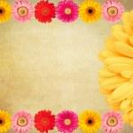 Daisy flowers Vintage background — Stock Photo