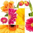 Stock Photo: Spring flowers collage