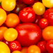 Colorful bunch of different varieties of organic tomatoes in a harvest - Stock Photo