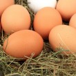 Chicken eggs in the hay — Stock Photo