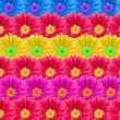 Multicolor Flower Blossoms Background — Stock Photo