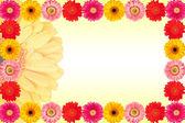 カラフルなデイジーの花の背景 — ストック写真