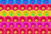Multicolor Flower Blossoms Background — Stock fotografie