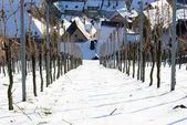 Wijngaard bedekt met sneeuw — Stockfoto