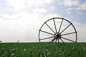 Wheat field with irrigation system — Stock Photo