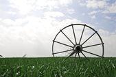 пшеничное поле с системой орошения — Стоковое фото