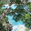 Stock Photo: High view of coastline through tree leaves