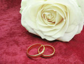 Wedding rings and white rose on red velvet — ストック写真