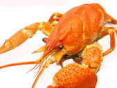 Red cooked river lobster — Stock Photo