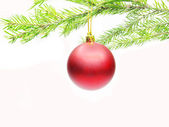 Red christmas ball on fir branch — Stock Photo