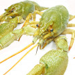Green river lobster - Stock Photo