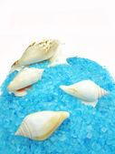 Spa sea shells and salt — Stock Photo