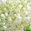Lily of the valley floral background — Foto de Stock