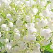Liljekonvalj floral bakgrund — Stockfoto