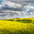 Lincolnshire wolds with oil seed rape — Stock Photo