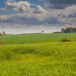 Stock Photo: Green feilds in lincolnshire wolds
