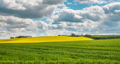 Lincolnshire Wolds — Stock Photo