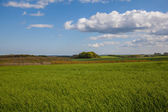 Green feilds in the lincolnshire wolds with sky — Stock Photo