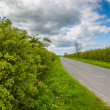 Stock Photo: Threatened hedgerows