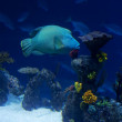 Stock Photo: Coral reef pano