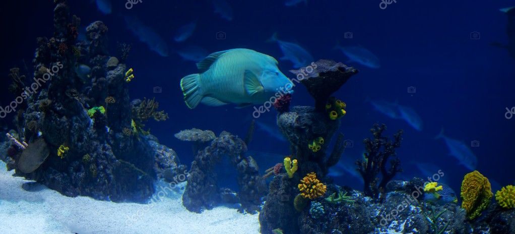 A panorama of a coral reef with many fish — Stock Photo #9611819