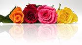 Mixed roses relection — Stock Photo