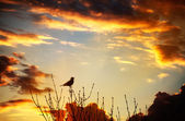 Bird singing at sunset — Stock Photo
