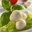 Mozzarella and basil — Stock Photo